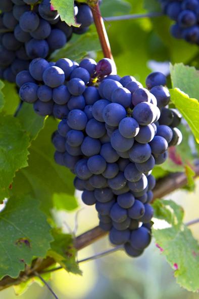 Vignobles Entraygues - Le Fel